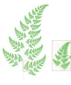fractal fern changed