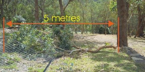 5 metre branch