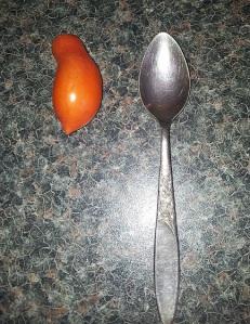 tomato closeup with tspoon