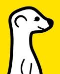 meerkat pic small