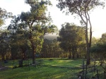 warrandyte mist at dawn