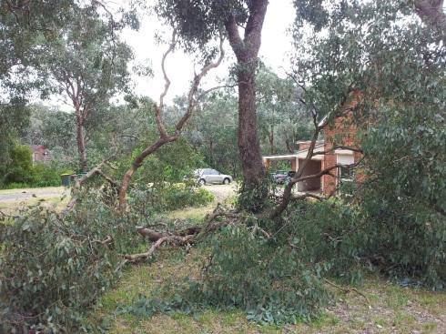 fallen-tree-branch-2