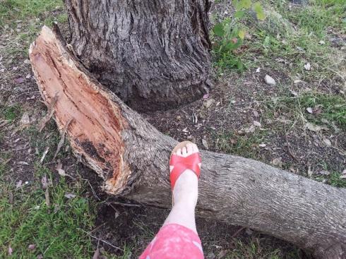 fallen-tree-branch